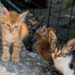 The cats and kittens of Glossa are well known and streetwise