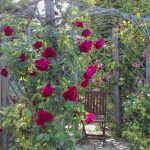 Rose Arbour